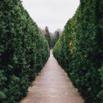Dove comprare le piante online, siti a confronto