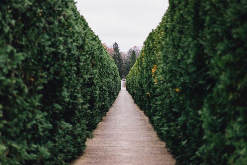 piante-on-line_800x533