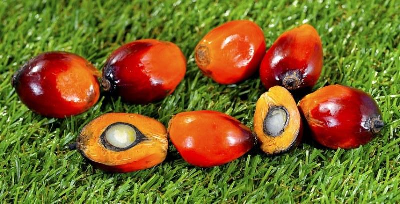 foto-frutto-palma