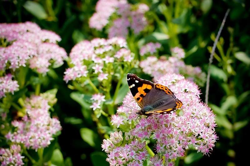 fiori-e-piante_800x531