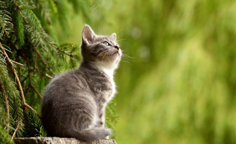 Come aiutare il gatto a fare pipi